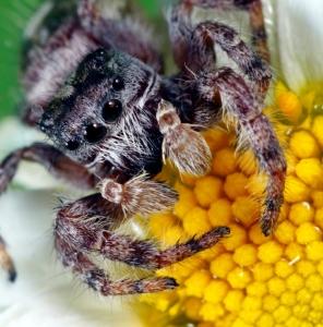 A spider in the Pollen