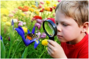 A Young Boy Magnifying To See the Butterfly