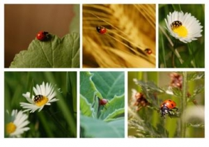 Little Bugs on Flowers and Leaves