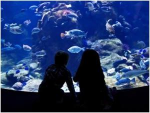 Number Of Fishes Inside The Aquarium