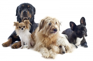 Five Different Dog Breeds Together