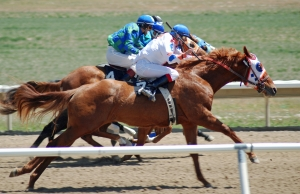 Horse Racing with Thoroughbreds