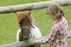 Little Girl Feeding a Pony