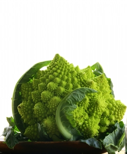 The Head of Cabbage Romanesco